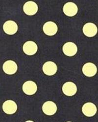 Quarter Dot Kiwi by