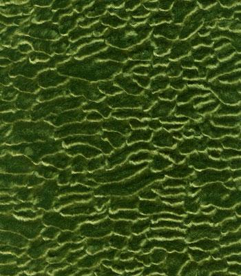 Shannon Fabrics Persian Lamb  Olive Search Results