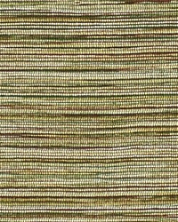 Rainbow Pine by