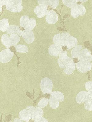 Brewster Wallcovering Bebe Light Green Blossom Light Green Search Results