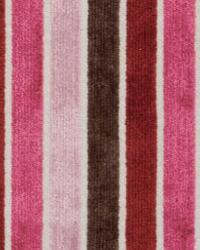 Maxwell Fabrics NOTRE DAME 305 ROSE DUST Fabric