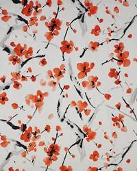 Maxwell Fabrics New Beginning 239 Cherry Fabric