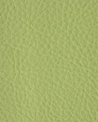 Novel Walter Scallion Fabric