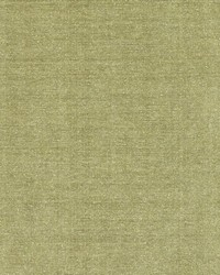 DQ61335 22 OLIVE by