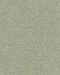 DQ61335 554 KIWI by
