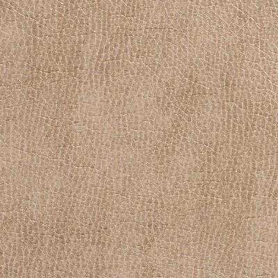 Charlotte Fabrics 7432 Birch Search Results