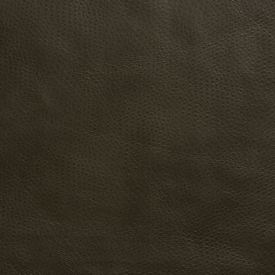 Charlotte Fabrics 8262 Hickory Search Results
