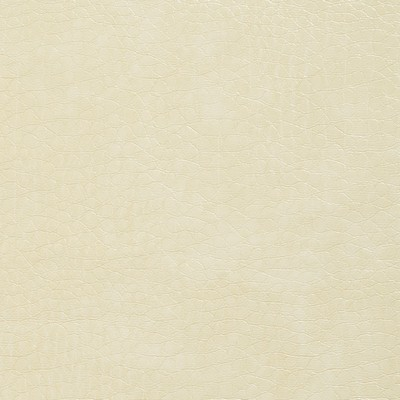 Charlotte Fabrics 8268 Ivory Search Results