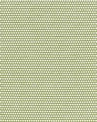 Scalamandre Corsica Weave Palm Fabric