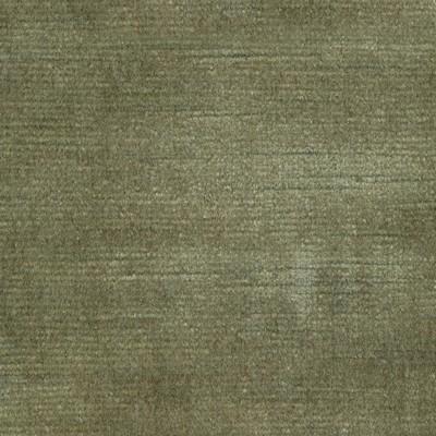 Kasmir ARISTOCRAT       OLIVE            Search Results