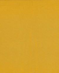 Debonair Citrus by