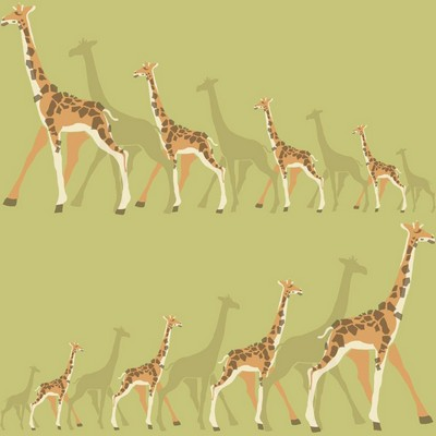 York Wallcovering DwellStudio Baby & Kids Giraffes                                           Greens /Oranges /Browns   Animals