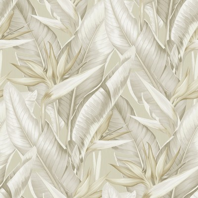 Brewster Wallcovering Arcadia Beige Banana Leaf Wallpaper Beige Search Results
