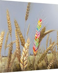 Summer Wheat Canvas Art by
