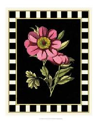 58955Z Besler Pink Peony III by