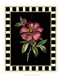 58956Z Besler Pink Peony IV by