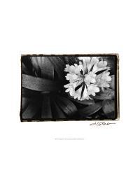 59020F Floral Elegance IV by