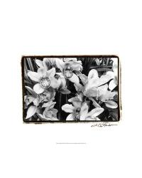 59023F Striking Orchids III by