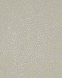 Beige The Symphony Fabric  Persuasion-Chiffon