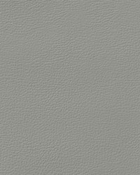 Auto Revolution Longitude Light Titanium Vinyl by