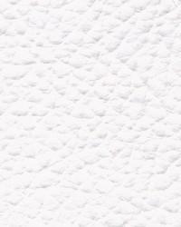 Xtreme 607 White by