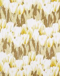 Tulipa Parchment by  In Stock