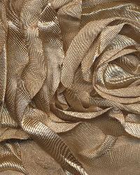 Floribunda Rose Champagne by