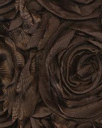 Floribunda Rose Chocolate by