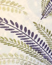 Grotto Fern by