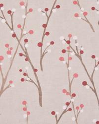 Hidcote Cherry by