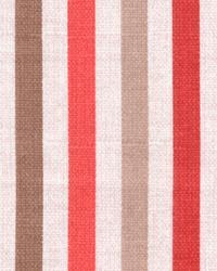 Hidcote Stripe Cherry by