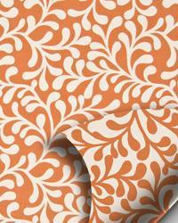 Jumba Pumpkin by