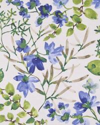 Morning Bliss Cornflower by  In Stock
