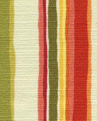 Pathway Stripe Apricot by