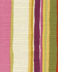 Pathway Stripe Orchid by
