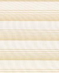 Sheer Horizon IO Gold by