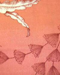 Orange Medium Print Floral Fabric  Shorecrest Coral