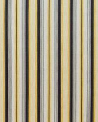 Tilden Stripe Midas by