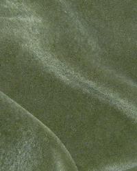 Nevada Lichen by