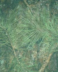 True Timber Camouflage Green Net by