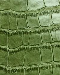 Big Crocodile Green by