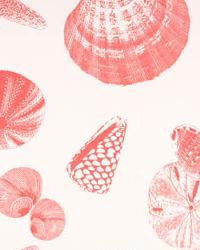 Shells Coral White by