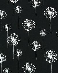 Small Dandelion Black White by