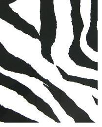 Zebra Black White by