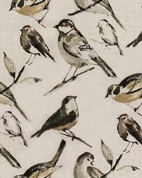 Birdwatcher Charcoal by
