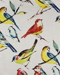 Birdwatcher Summer by