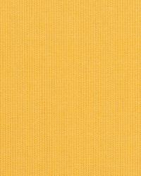 Spectrum Daffodil by
