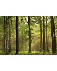 216 Autumn Forest by