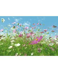 281 Flower Meadow by