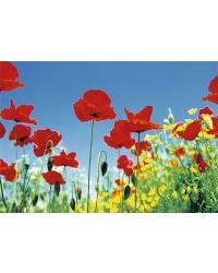 283 Poppy Field by